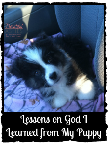 Lessons on God I Learned from My Puppy